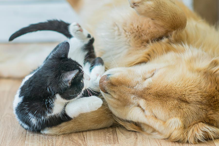 Compassionate Pet Care in Chandler AZ